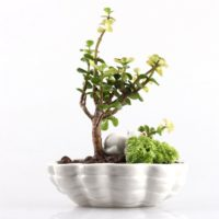 Cute White Cat Kitten Lying on a Shell Small Size Coloured Porcelain Ceramic Flower Pot Planter for Cacti Succulents Ferns Mos 6.1 X 5 X 3.3 inches Plants not included
