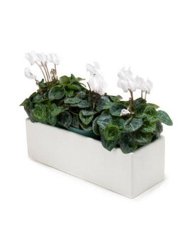 "13"" x 5"" White Ceramic Large Slim Long Planter Box Flower Pot"