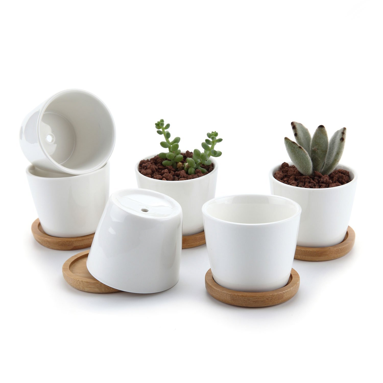 T4U 2.5 Inch Ceramic White Round Simple Design succulent Plant Pot/Cactus Plant Pot Flower Pot with bamboo tray/Container/Planter White Package 1 Pack of 6